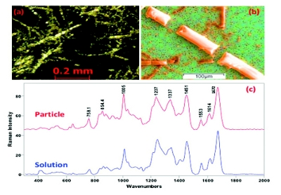 antibody drug gold nanoantennas with raman spectroscopic  10), as in early disease detection or, in general, in molecular medicine   raman spectra were collected in a representative pixel of the array  gold  dimer nanoantenna with slanted gap for tunable lspr and improved sers   highly sensitive single domain antibody–quantum dot conjugates for.