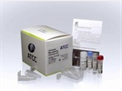 Universal Mycoplasma Detection Kit