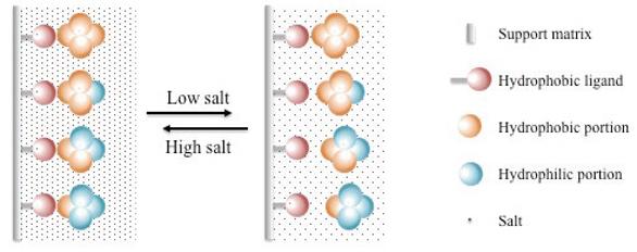 Hydrophobic Interaction Chromatography for Antibody Drug Conjugate ...