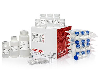 Thermo Fisher Expands Plasmid DNA Purification Portfolio