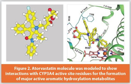 Modeling in Drug Metabolism for Drug Discovery and