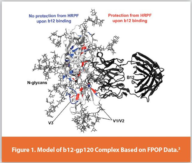 Model of b12-gp120 Complex Based on FPOP Data.