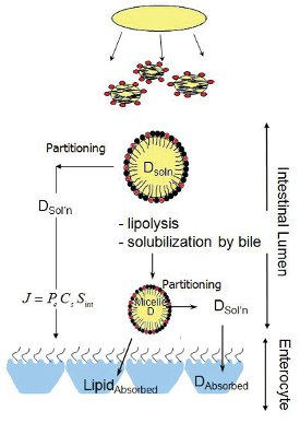 self emulsifying drug delivery system thesis