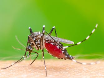 Amivas Announces FDA Approval of Artesunate for Injection for Severe Malaria